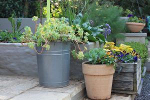 Food for Thought – Edible Garden