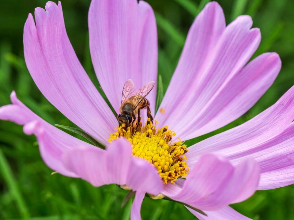 A Bee-friendly backyard